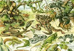This is an antique french print from 1930. This lovely print comes from the Larousse Universel printed in Paris. This is the original print, not a copy. Frame it or use it ... #scrapbooking #crocodile #zoology