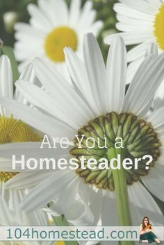 """""""Homesteading is not defined by where someone lives, such as the city or the country, but by the lifestyle choices they make."""" - Homegrown & Handmade, published by Backyard Farming, Backyard Patio, Permaculture, Raising Farm Animals, Urban Homesteading, Homestead Survival, Simple Life Hacks, Farm Gardens, Sustainable Living"""