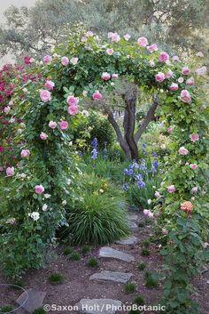 100 Garden Pathway Ideas and Inspiration - Easy Balcony Gardening #gardenpaths #gardenpathways #gardeninspiration #gardenideas Fairytale Garden, Dream Garden, Enchanted Garden, Small Gardens, Outdoor Gardens, Fairy Gardens, Indoor Garden, Unique Garden, Small Rose Garden Ideas