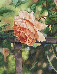 Life in Full Color - Watercolors by Cara Brown - Nancys Rose
