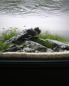 Project Scree minimalist aquarium