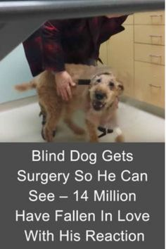 #Formerly #Blind Dog Sees After #Surgery