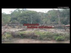 """""""Las lágrimas de la selva"""" Stop a la deforestación en el Amazonas. Culturas Indómitas - YouTube"""