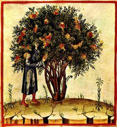 from Tacuinum sanitatis casanatensis, a medieval handbook on wellness, 14th century