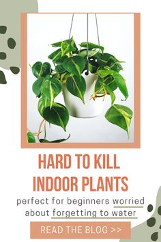 Are you someone who forgets to water your houseplants? Check out these 10 indoor low maintenance plants. We've included a mixture of low light plants, plants that can tolerate forgettful waterers, and plants for beginners that will clean the air. You're sure to find the best low maintenance houseplants for your home. Types Of Houseplants, Hoya Plants, Types Of Plants, Air Plants, Low Maintenance Indoor Plants, Snake Plant Care, Prince Of Orange, Low Light Plants, Lucky Bamboo