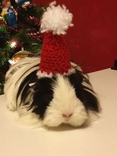 I made some Christmas costumes for my sister's guinea pigs, and here is the first one, a Santa hat. (Check out the other one here.) It also fits a Barbie, so you can crochet one and be festive!