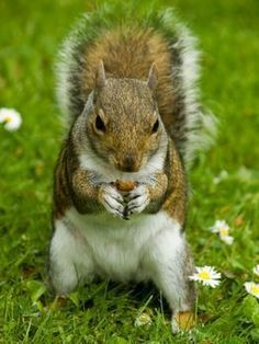 Step 1. How to Keep Squirrels Out of Your Garden Step 2. Aim well if step one does not work ha ha. jk