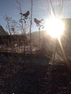 Lever de soleil dans mon jardin