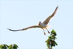 Und schnell weg mit der Kirsche! Bird, Animals, Kinds Of Birds, Cherry, Animales, Animaux, Birds, Animal, Animais