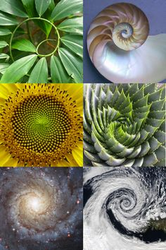 Fibonacci sequence. -flower of life. -> Great tools for light-workers.. Flower of Life T-Shirts, V-necks, Sweaters, Hoodies & More ONLY 13$ EACH! LIMITED TIME CLICK ON THE PIC