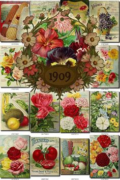 SEEDS-55 Catalogs Covers Collection with 96 vintage images