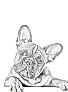 Französische Bulldogge (Frenchie) Kunstdruck - Druck von