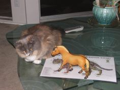 Sofia studying meridians