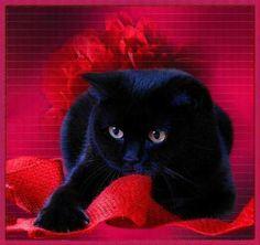 Beautiful BLACK Cat ー*★