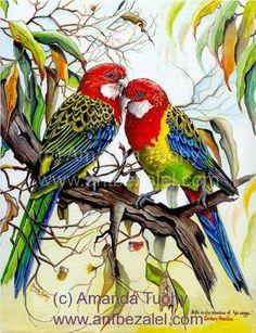 Eastern Rosella Greeting Card (Set of Birds Painting, Parrots Art, Animal Art, Australian Painting, Bird Artwork, Art, Animal Paintings, Bird Pictures, Bird Art