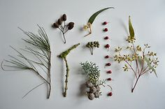 Botany, Planting Flowers, Hair Accessories, Wreaths, Creative, Plants, Fern, Door Wreaths, Flora