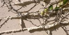 White Bricks with Vine La Jolla CA Hardscape #vine, bricks, #nofilter, #meditation, #writingprompt Subscribe to smalllifedetails.com for a daily email picture with no ads.