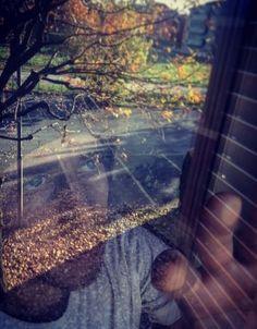 Autumn, Glass, Window Photo