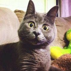 Забавное видео: Потрясающая реакция кота на встречу с тиграми https://joinfo.ua/leisure/animals/1209886_Zabavnoe-video-Potryasayuschaya-reaktsiya-kota.html