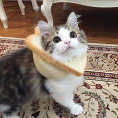 tumblrzando (@vcstumblr) | Twitter Funny Cats, Funny Animals, Cute Animals, Cute Baby Cats, Cute Babies, Pretty Cats, Make You Smile, Cats And Kittens, Bunny