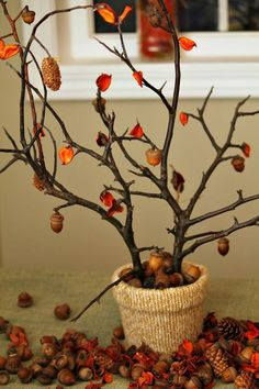 65 Easy Thanksgiving Centerpieces That'll Wow Your Guests - 65 Easy Thanksgiving Centerpieces That'll Wow Your Guests 56 Fall and Thanksgiving Centerpieces – DIY Ideas for Fall Table Decorations Diy Thanksgiving Centerpieces, Fall Table Centerpieces, Centerpiece Ideas, Fall Table Decorations, Tree Branch Centerpieces, Branch Decor, Table Color, Thanksgiving Tree, Fall Diy