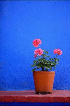 Saffron and Silk: The colors of Mexico
