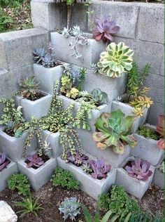 garten-pflanzen Cinder Block Garden Plants # Raised Bed Garten Ideen A c Backyard Projects, Garden Projects, Diy Projects, Project Ideas, Backyard Ideas On A Budget, Arizona Backyard Ideas, Diy Garden Ideas On A Budget, Small Garden Bed Ideas, Cheap Patio Ideas