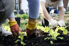 "Grow a vegetable garden. Good for your health and good for the environment.  This article can help you get started: ""How to plant a vegetable garden in the N.C. Piedmont"" http://www.charlotteobserver.com/2012/03/22/3120509/how-to-plant-a-vegetable-garden.html"