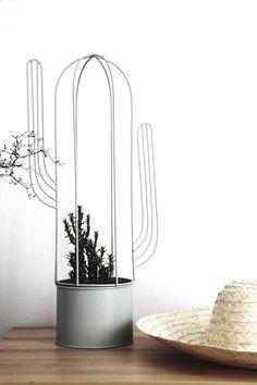 Karl, der kleine Kaktus muss noch wachsen und damit er eine schöne Form bekommt, hat er natürlich ein Korsett als Formgeber ☺️
