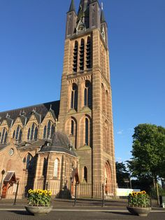 Sunflowers in Hilversum to commemorate the victims of flight MH17 (Zonnebloemen in Hilversum)