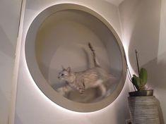 homemade DIY cat wheel (and also designlight) #catsdiyplayground
