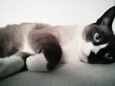 #Cats, #Gatos Sensei
