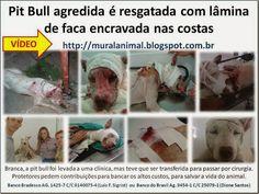 Mural Animal: Pit Bull agredida é resgatada com lâmina de faca e...