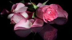 "Photo from album ""Цветы on Yandex. Flower Bokeh, Daffodil Flower, Flower Petals, Beautiful Rose Flowers, Amazing Flowers, Purple Flowers, Wallpaper Images Hd, Wallpaper Backgrounds, Wallpapers"