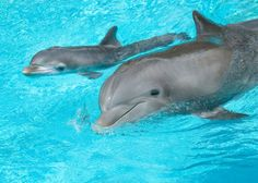 Dolphins  Dolphins  Dolphins