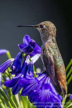 A studious hummingbird moment...