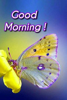 Good Morning Roses, Cute Good Morning, Beautiful Morning, Good Morning Images Hd, Morning Greeting, Love Images, Image Hd, Morning Quotes, Curvy