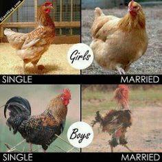 Girls Married Vs Boys Married | Click the link to view full image and description : )