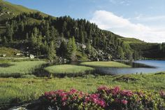 the true source of ARVEN's unrivalled timber Carinthia, Wonderful Places, Austria, Trip Advisor, Golf Courses, Nature, Travel, Life, Outdoor
