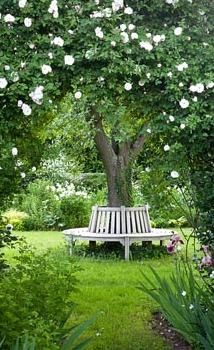 9 Satisfied Hacks: Backyard Garden On A Budget Walkways large backyard garden design.Urban Backyard Garden Tuin backyard garden on a budget curb appeal. Bench Around Trees, Tree Bench, Tree Seat, Trees In Pots, Tree Trunk Table, Fruit Trees, Amazing Gardens, Beautiful Gardens, The Secret Garden