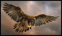 Fotografia Golden Eagle de Ronald Coulter na 500px