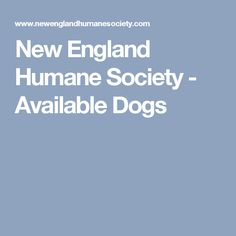 New England Humane Society - Available Dogs Dog Pounds, Humane Society, New Hampshire, New England, Tours