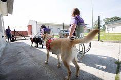 PUEBLA REVISTA: Entrenan perros para que ayuden a personas con dis...