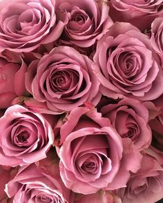 in love with pink roses ❤