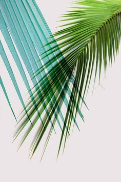Awesome palm leaves printable posters for modern people!  ❤ Design + Photos by #PrintsProject #Etsy #WallArt #PalmLeaves #TropicalDecor