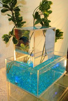 upside down aquarium | Upside Down Betta Aquarium - 3 gallon capacity 100% fully clear Lucite