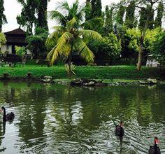 Feel Exotic At The Chedi Club Tanah Gajah, Ubud Bali. - Style and Travel Closet Lush Green, Ubud, Resorts, Fields, Bali, Exotic, Paradise, Hotels, Adventure