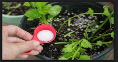 Από τους αρχαίους χρόνους, τα άλατα Epsom χρησιμοποιούνται για διάφορους σκοπούς, συμπεριλαμβανομένου της συντήρησης των κήπων. Τα άλατα Epsom είναι άφθονα σε μαγνήσιο και θειικό, δύο φυσικώς ενυπάρχοντα ανόργανα τα οποία είναι απαραίτητα για το