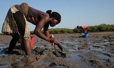 The women of Anacamona village eke out a physically challenging and hazardous living on the oyster beds of the Bijagós archipelago