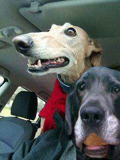 Pics Art, App, Link, Dogs, Animals, Animais, Animales, Animaux, Doggies